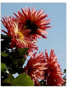 Herbstblumen, um