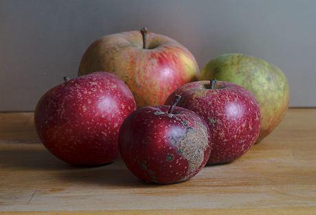 """Stilleben Äpfel - ist doch """"Kunst"""" ?!"""