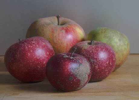 Stilleben: Äpfel