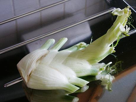 Fenchel - das Gemüse