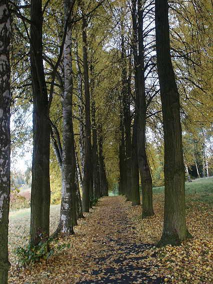 """Herbstmotiv - als Assoziation zu """"Lebensabschnitte"""""""