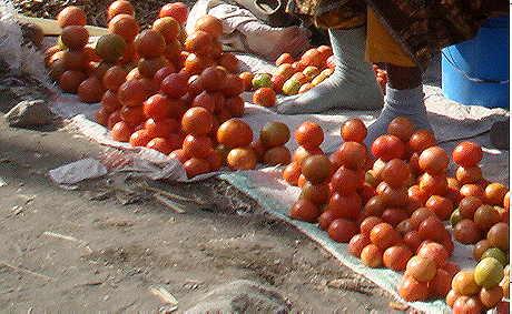Tomaten: unverzichtbarer Bestandteil der MAssai-Diät