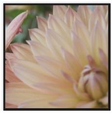 Blumen mit Trauerrand