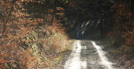 Nordic-Walking-Strecke Idstein